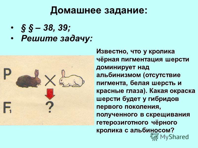 Домашнее задание: § § – 38, 39; Решите задачу: Известно, что у кролика чёрная пигментация шерсти доминирует над альбинизмом (отсутствие пигмента, белая шерсть и красные глаза). Какая окраска шерсти будет у гибридов первого поколения, полученного в ск