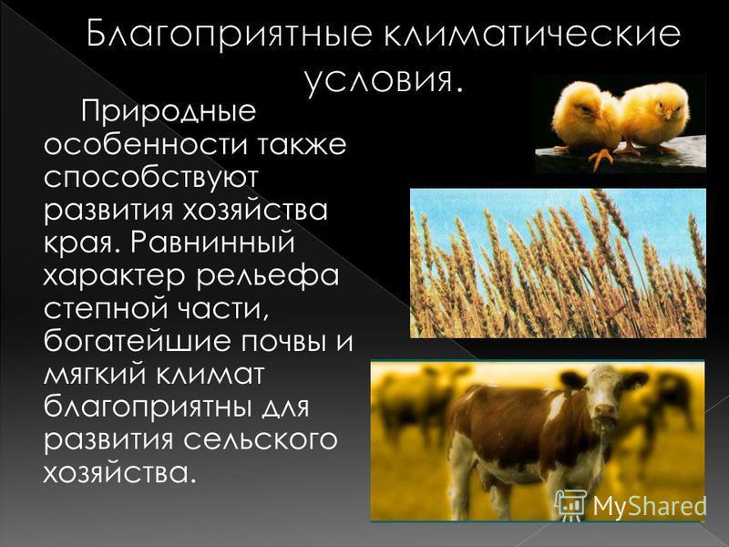 Природные особенности также способствуют развития хозяйства края. Равнинный характер рельефа степной части, богатейшие почвы и мягкий климат благоприятны для развития сельского хозяйства.