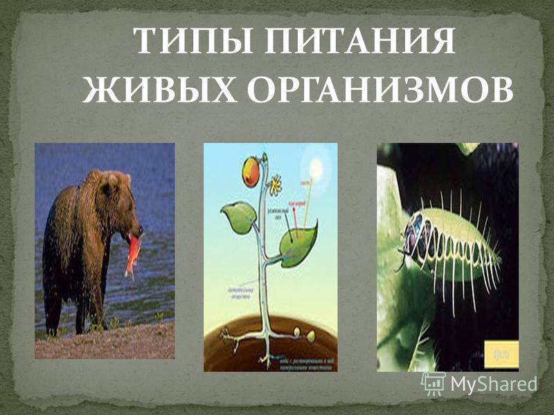 ТИПЫ ПИТАНИЯ ЖИВЫХ ОРГАНИЗМОВ