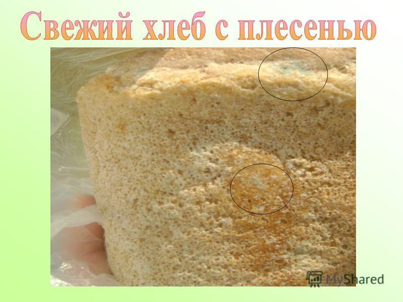 оранжевая плесень на хлебе приветствует портал