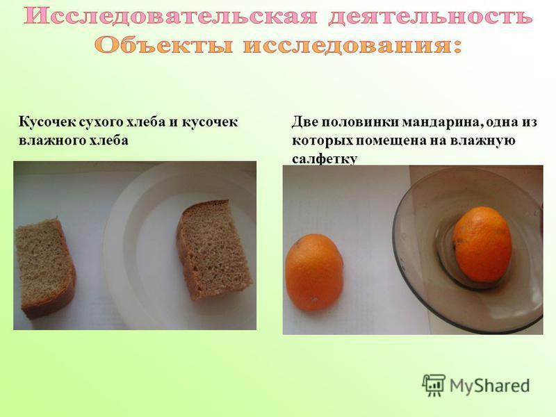 Кусочек сухого хлеба и кусочек влажного хлеба Две половинки мандарина, одна из которых помещена на влажную салфетку