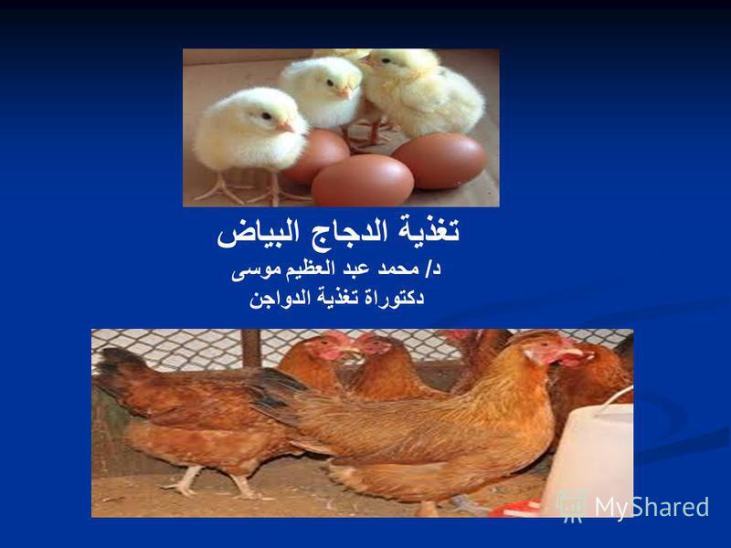 تغذية الدجاج البياض د/ محمد عبد العظيم موسى دكتوراة تغذية الدواجن