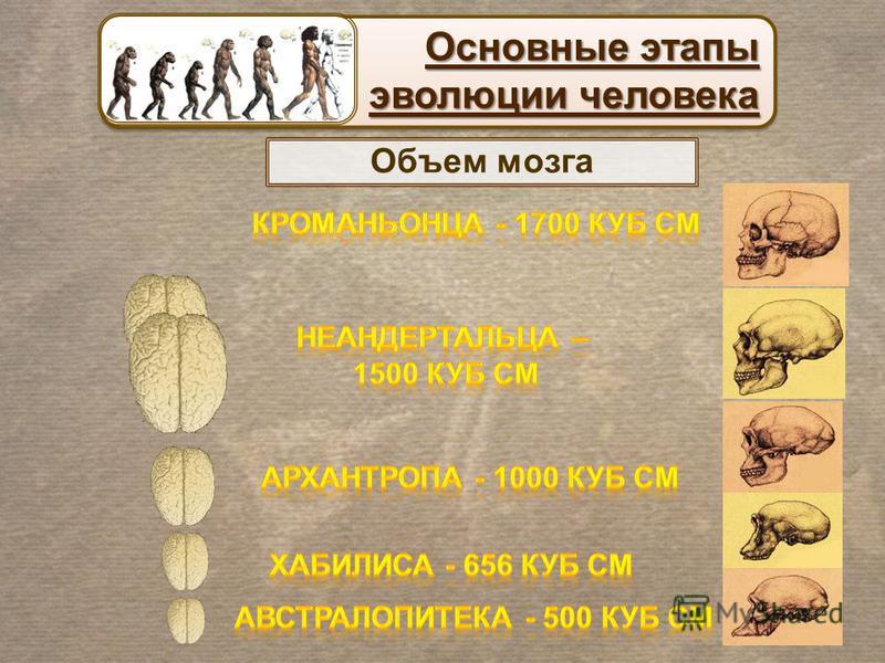 Основные этапы эволюции человека Основные этапы эволюции человека Объем мозга