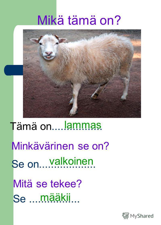 Mikä tämä on? Tämä on................. Minkävärinen se on? Se on................... valkoinen lammas Mitä se tekee? Se................. määkii