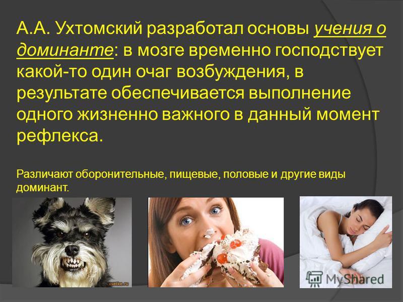 А.А. Ухтомский разработал основы учения о доминанте: в мозге временно господствует какой-то один очаг возбуждения, в результате обеспечивается выполнение одного жизненно важного в данный момент рефлекса. Различают оборонительные, пищевые, половые и д