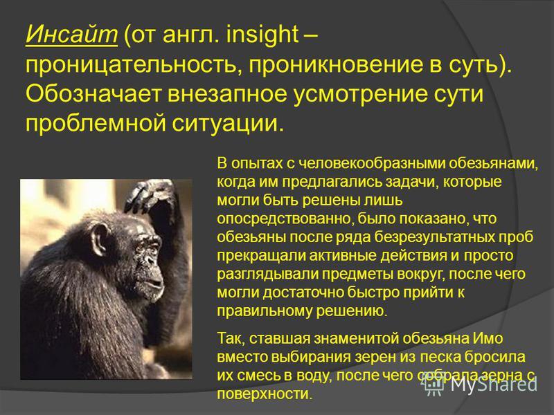 Инсайт (от англ. insight – проницательность, проникновение в суть). Обозначает внезапное усмотрение сути проблемной ситуации. В опытах с человекообразными обезьянами, когда им предлагались задачи, которые могли быть решены лишь опосредствованно, было