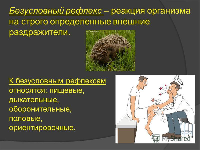 Безусловный рефлекс – реакция организма на строго определенные внешние раздражители. К безусловным рефлексам относятся: пищевые, дыхательные, оборонительные, половые, ориентировочные.