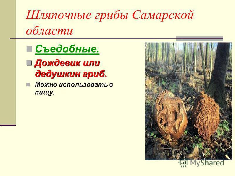 самара грибы фото