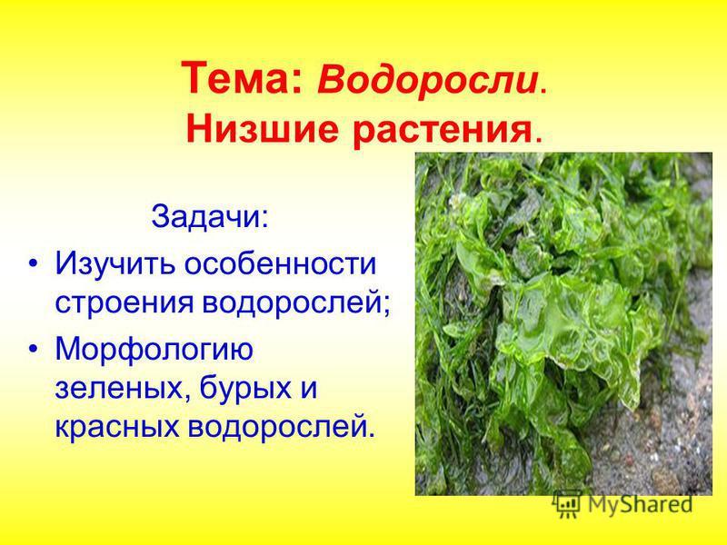 Тема: Водоросли. Низшие растения. Задачи: Изучить особенности строения водорослей; Морфологию зеленых, бурых и красных водорослей.