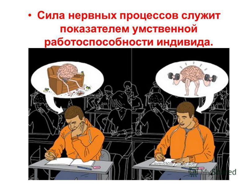 Сила нервных процессов служит показателем умственной работоспособности индивида.