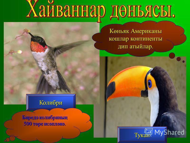 Колибри Тукан Көньяк Американы кошлар континенты дип атыйлар. Биредә колибриның 500 төре исәпләнә.