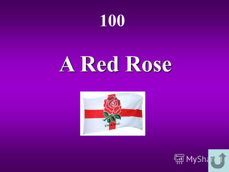 A Red Rose 100