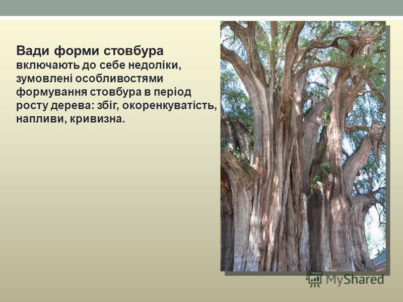 Вади форми стовбура включають до себе недоліки, зумовлені особливостями формування стовбура в період росту дерева: збіг, окоренкуватість, напливи, кривизна.
