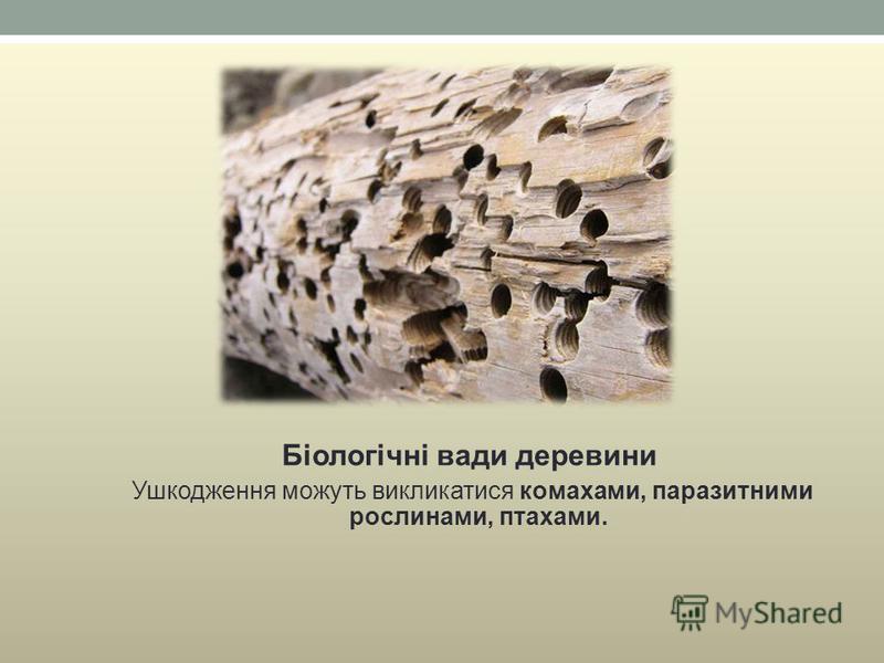 Біологічні вади деревини Ушкодження можуть викликатися комахами, паразитними рослинами, птахами.