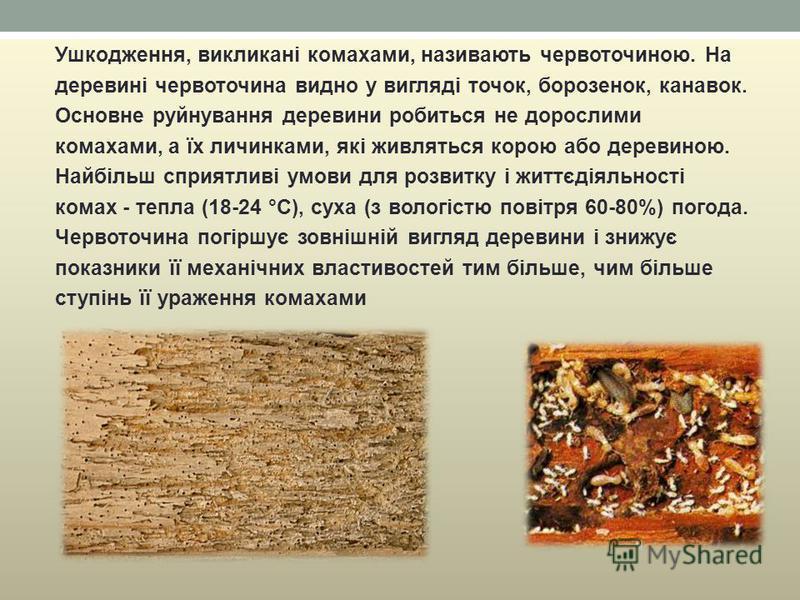 Ушкодження, викликані комахами, називають червоточиною. На деревині червоточина видно у вигляді точок, борозенок, канавок. Основне руйнування деревини робиться не дорослими комахами, а їх личинками, які живляться корою або деревиною. Найбільш сприятл