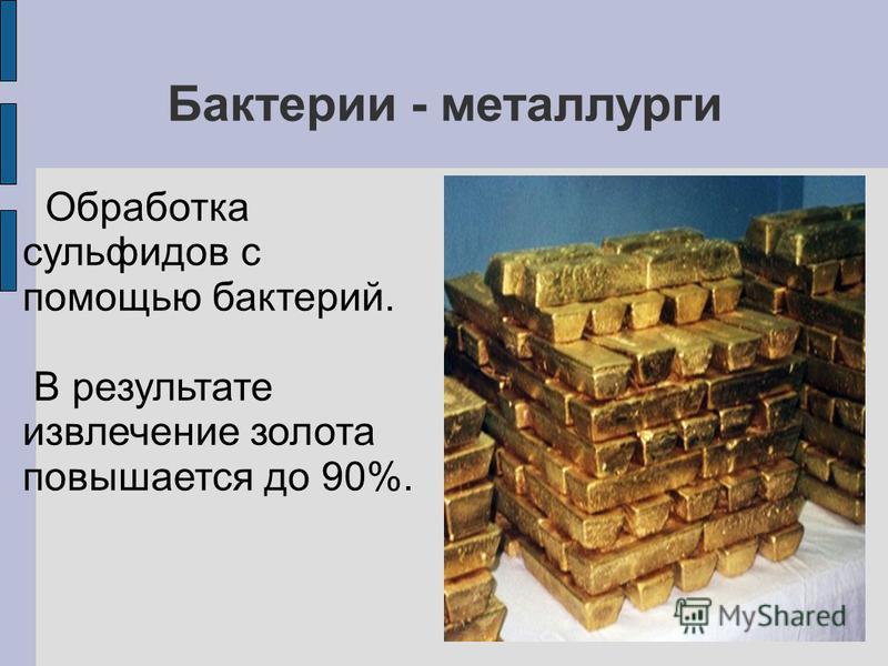 Бактерии - металлурги Обработка сульфидов с помощью бактерий. В результате извлечение золота повышается до 90%.