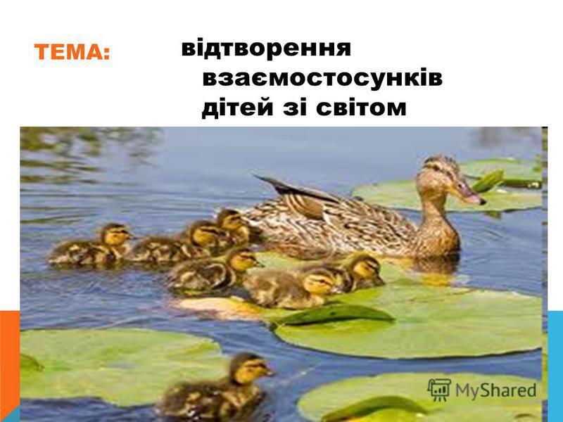 ТЕМА: відтворення взаємостосунків дітей зі світом природи ( качиною сімєю).