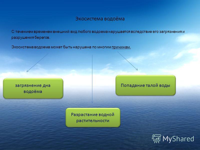 Экосистема водоёма С течением временем внешний вид любого водоема нарушается вследствие его загрязнения и разрушения берегов. Экосистема водоема может быть нарушена по многим причинам. загрязнение дна водоёма Попадание талой воды Разрастание водной р