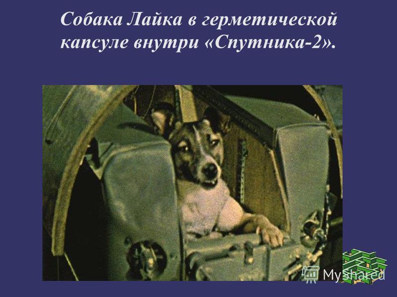 Собака Лайка в герметической капсуле внутри «Спутника-2».