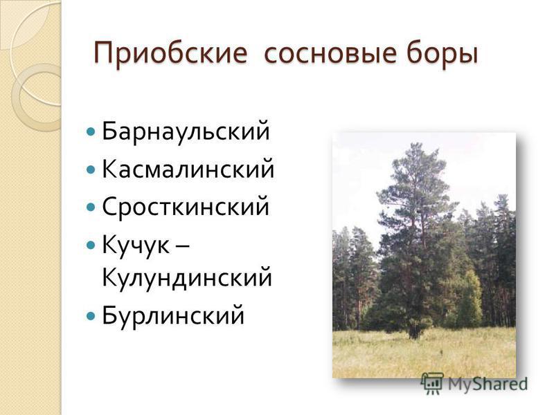 Приобские сосновые боры Барнаульский Касмалинский Сросткинский Кучук – Кулундинский Бурлинский