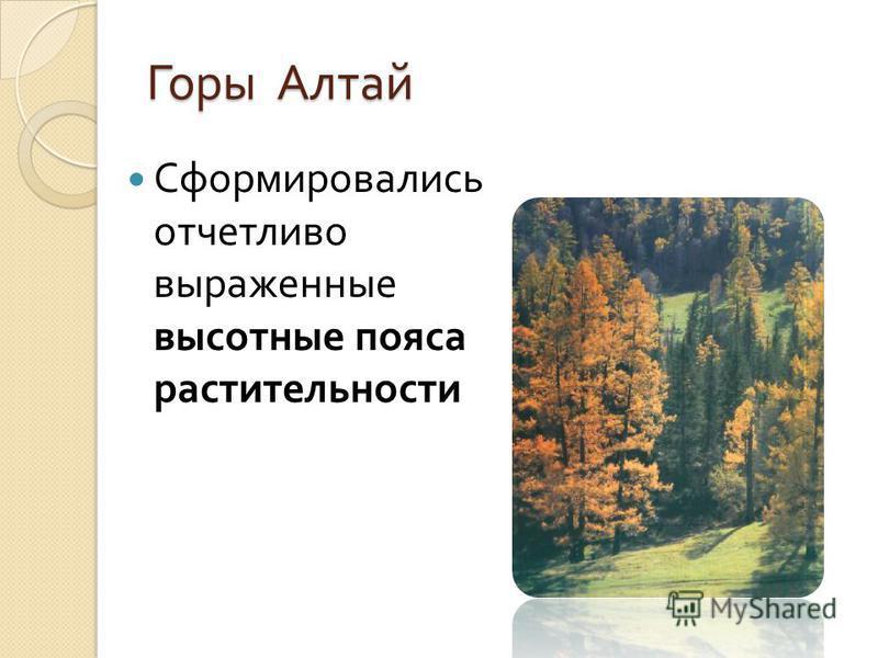 Горы Алтай Сформировались отчетливо выраженные высотные пояса растительности