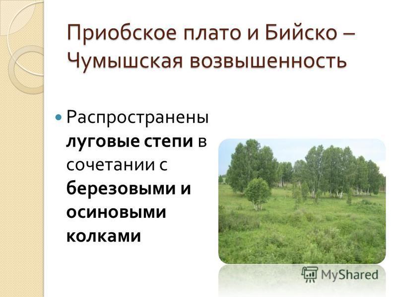 Приобское плато и Бийско – Чумышская возвышенность Распространены луговые степи в сочетании с березовыми и осиновыми колками