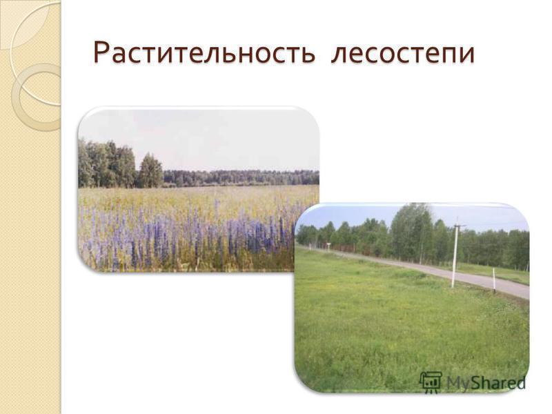 Растительность лесостепи