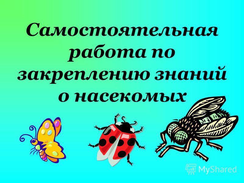 Cамостоятельная работа по закреплению знаний о насекомых
