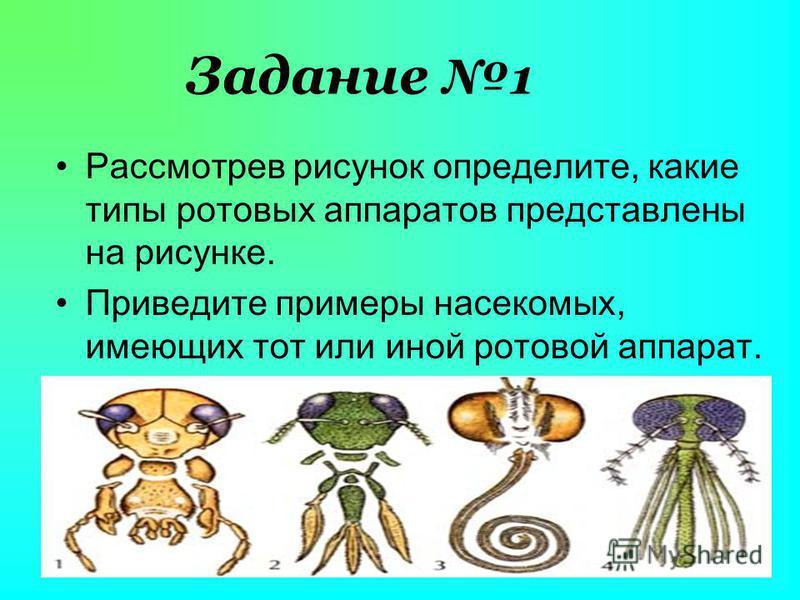 Задание 1 Рассмотрев рисунок определите, какие типы ротовых аппаратов представлены на рисунке. Приведите примеры насекомых, имеющих тот или иной ротовой аппарат.