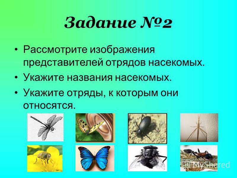 Задание 2 Рассмотрите изображения представителей отрядов насекомых. Укажите названия насекомых. Укажите отряды, к которым они относятся.