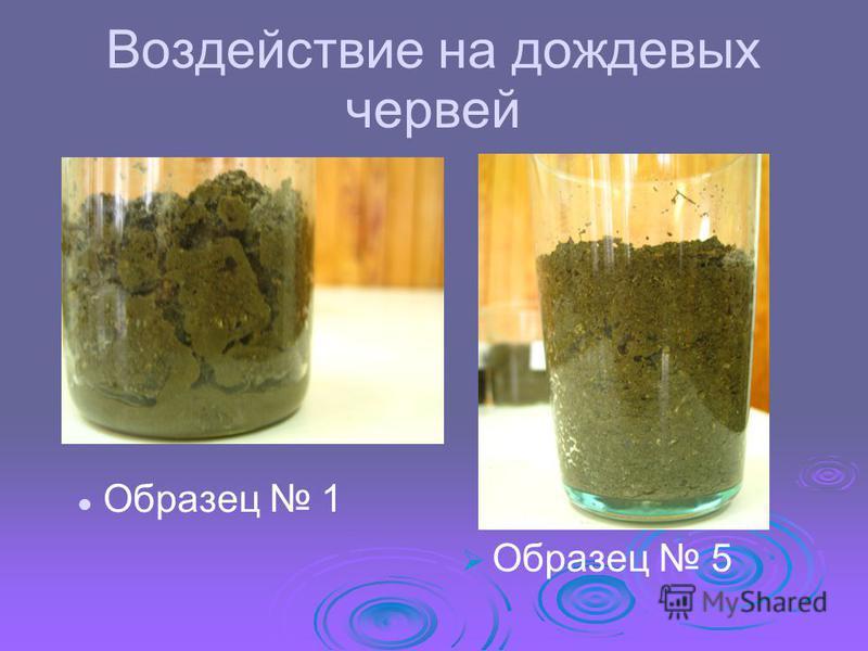 Воздействие на дождевых червей Образец 5 Образец 1