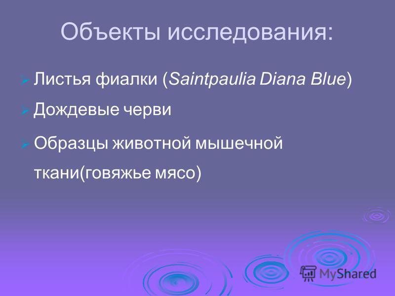 Объекты исследования: Листья фиалки (Saintpaulia Diana Blue) Дождевые черви Образцы животной мышечной ткани(говяжье мясо)