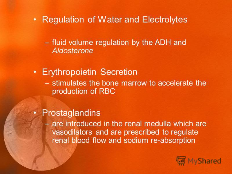 Regulation of Water and Electrolytes –fluid volume regulation by the ADH and Aldosterone Erythropoietin Secretion –stimulates the bone marrow to accelerate the production of RBC Prostaglandins –are introduced in the renal medulla which are vasodilato