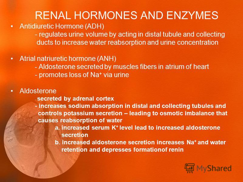 RENAL HORMONES AND ENZYMES Antidiuretic Hormone (ADH) - regulates urine volume by acting in distal tubule and collecting ducts to increase water reabsorption and urine concentration Atrial natriuretic hormone (ANH) - Aldosterone secreted by muscles f