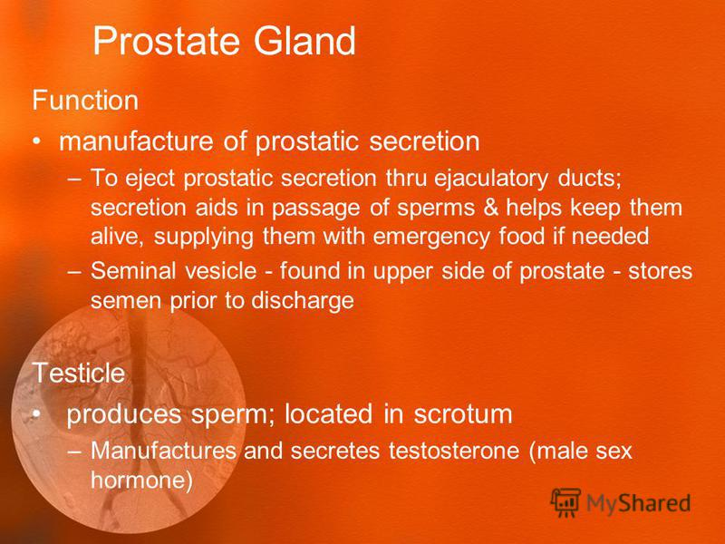 Prostate Gland Function manufacture of prostatic secretion –To eject prostatic secretion thru ejaculatory ducts; secretion aids in passage of sperms & helps keep them alive, supplying them with emergency food if needed –Seminal vesicle - found in upp