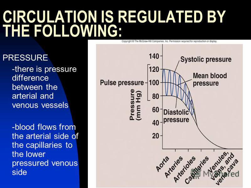 CIRCULATION IS REGULATED BY THE FOLLOWING: PRESSURE -there is pressure difference between the arterial and venous vessels -blood flows from the arterial side of the capillaries to the lower pressured venous side