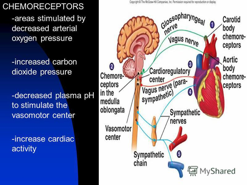 CHEMORECEPTORS -areas stimulated by decreased arterial oxygen pressure -increased carbon dioxide pressure -decreased plasma pH to stimulate the vasomotor center -increase cardiac activity