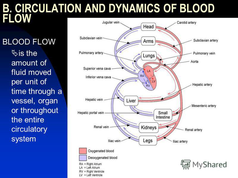 B. CIRCULATION AND DYNAMICS OF BLOOD FLOW BLOOD FLOW is the amount of fluid moved per unit of time through a vessel, organ or throughout the entire circulatory system