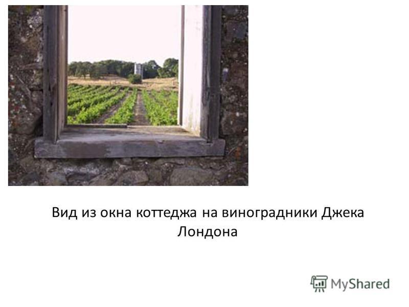 Вид из окна коттеджа на виноградники Джека Лондона