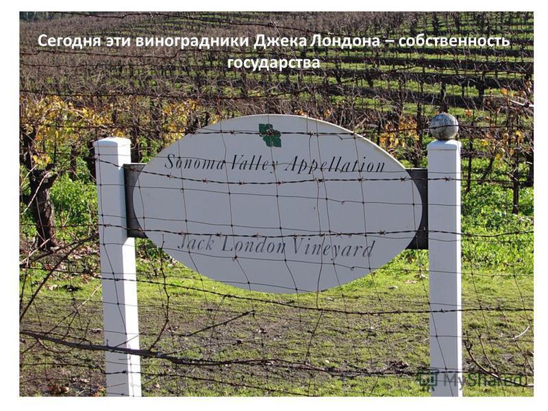 Сегодня эти виноградники Джека Лондона – собственность государства