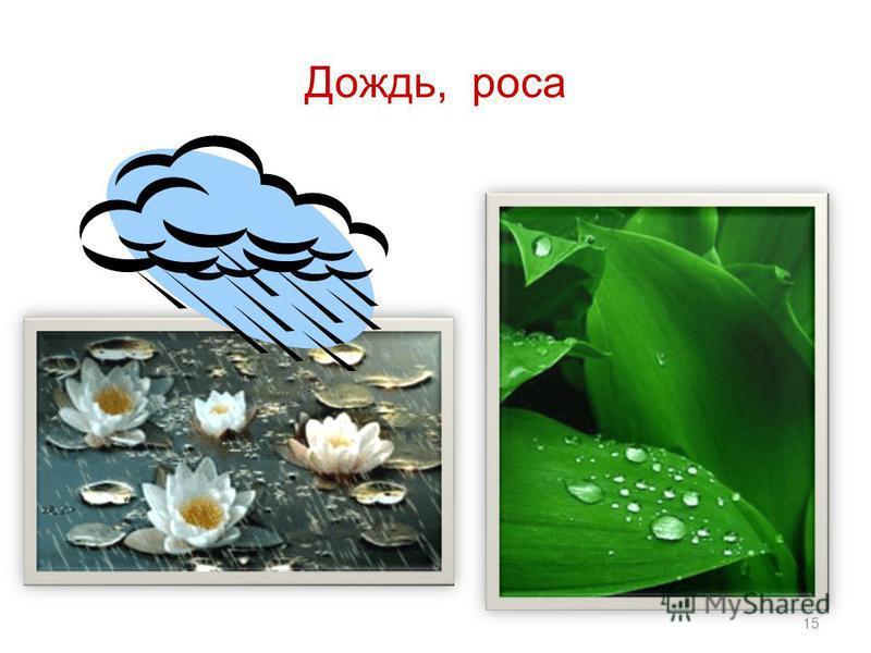 Дождь, роса 15