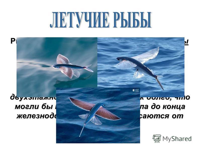 Рыбы иногда покидают воду. Летучие рыбы выпрыгивают из воды, раскрывают плавники и летят над водой; могут разгоняться до такой скорости, с какой ездят автомобили в городе! Они поднимаются над водой на высоту двухэтажного дома и летят так долго, что м