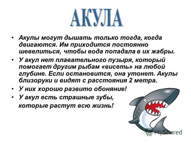 Акулы могут дышать только тогда, когда двигаются. Им приходится постоянно шевелиться, чтобы вода попадала в их жабры. У акул нет плавательного пузыря, который помогает другим рыбам «висеть» на любой глубине. Если остановится, она утонет. Акулы близор