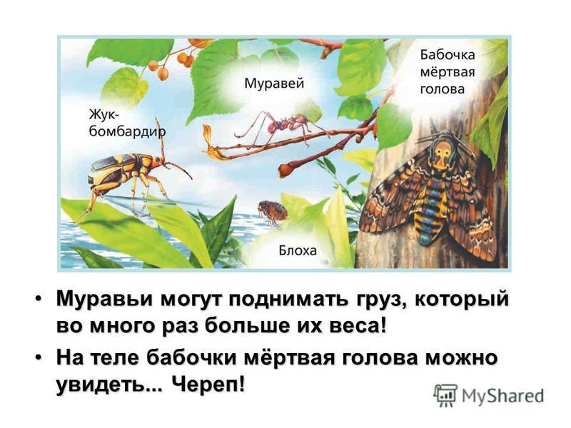 Муравьи могут поднимать груз, который во много раз больше их веса!Муравьи могут поднимать груз, который во много раз больше их веса! На теле бабочки мёртвая голова можно увидеть... Череп!На теле бабочки мёртвая голова можно увидеть... Череп!