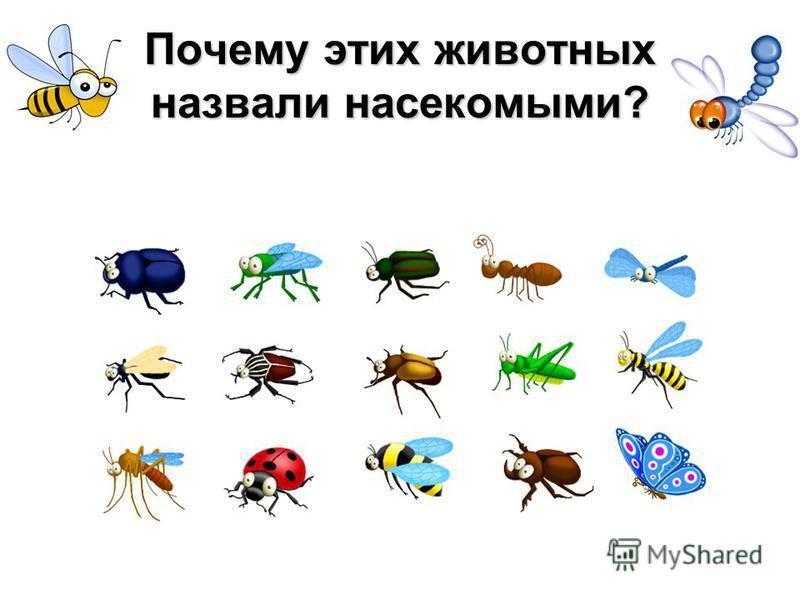 Почему этих животных назвали насекомыми?