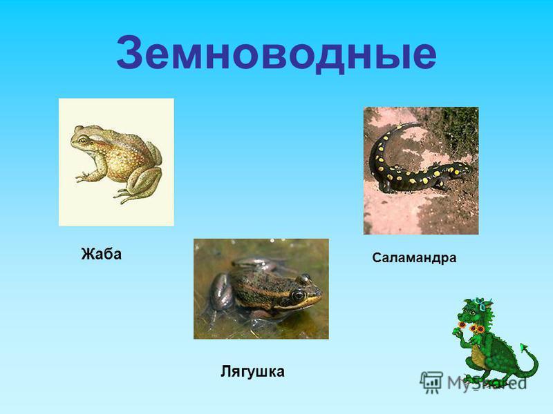 Земноводные Жаба Лягушка Саламандра