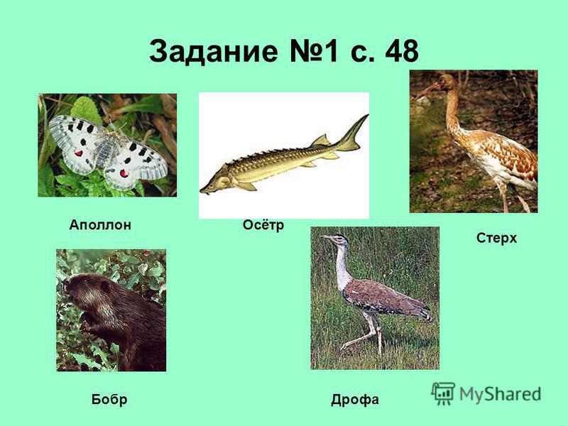 Задание 1 с. 48 Аполлон Осётр Стерх Бобр Дрофа