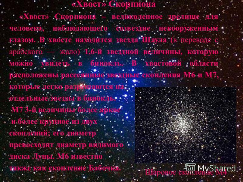 «Хвост» Скорпиона «Хвост» Скорпиона – великолепное зрелище для человека, наблюдающего созвездие невооруженным глазом. В хвосте находится звезда Шаула (в переводе с арабского жало) 1,6-й звездной величины, которую можно увидеть в бинокль. В хвостовой