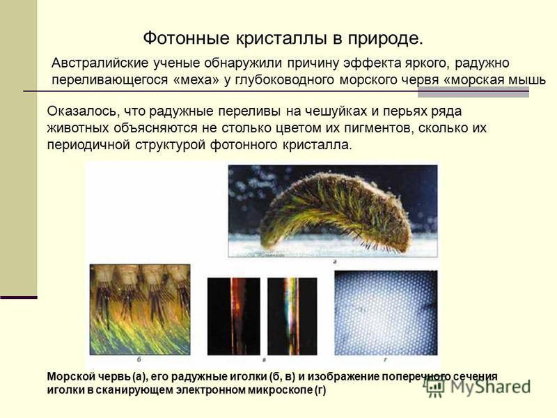 Фотонные кристаллы в природе. Австралийские ученые обнаружили причину эффекта яркого, радужно переливающегося «меха» у глубоководного морского червя «морская мышь Оказалось, что радужные переливы на чешуйках и перьях ряда животных объясняются не стол