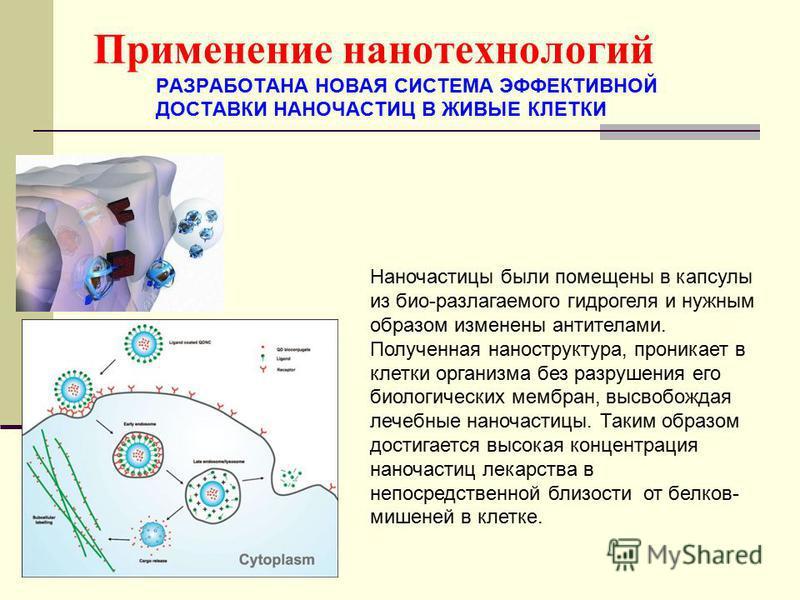 Применение нанотехнологий РАЗРАБОТАНА НОВАЯ СИСТЕМА ЭФФЕКТИВНОЙ ДОСТАВКИ НАНОЧАСТИЦ В ЖИВЫЕ КЛЕТКИ Наночастицы были помещены в капсулы из био-разлагаемого гидрогеля и нужным образом изменены антителами. Полученная наноструктура, проникает в клетки ор